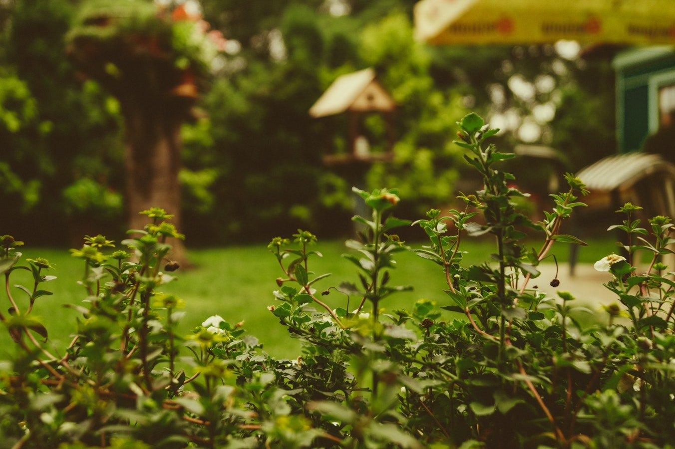 Tips for Your Summer Garden