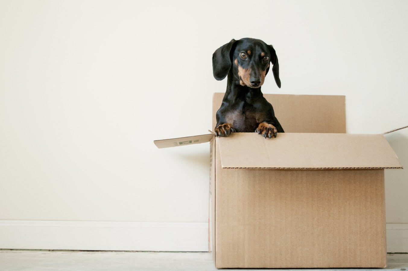 moving-houses-with-pet